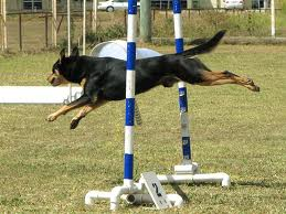 Libri addestramento cani
