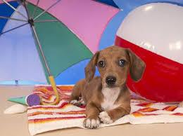 cane-educazione-spiaggia