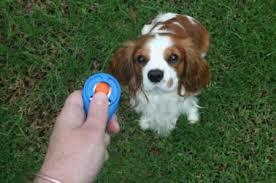 strumenti addestramento cani